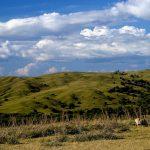 Dia Nacional do Bioma Pampa