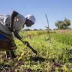 CNBB e Cáritas Brasileira encerram doações para a Campanha SOS África