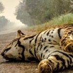 Bispos emitem carta alerta sobre a queimada no Pantanal